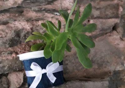 Vasetto yogurt per pianta